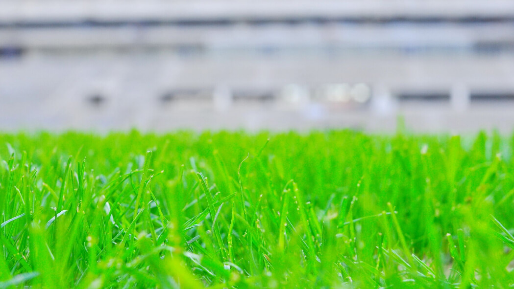 Natural turf, pitch, grass, sports