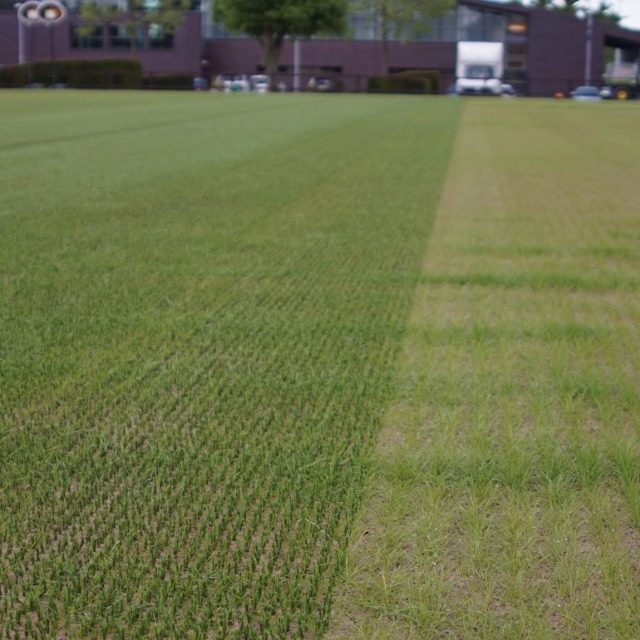 Chelsea F.C, SISGrass, hybrid pitch, reinforced natural turf pitch,