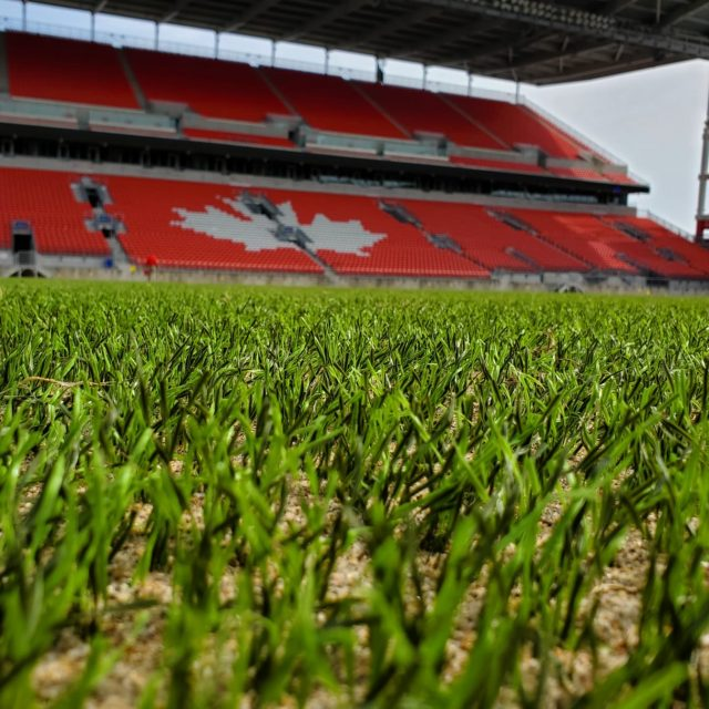 SIS Pitches, BMO field SISGrass hybrid grass renovation